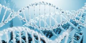 dnk1 300x150 ДНК воспринимает колебания и слова