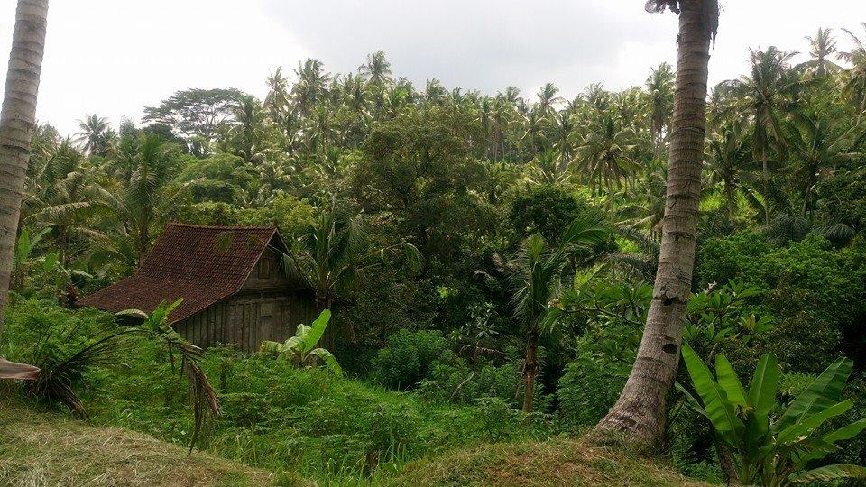 «Открытое Сердце» на Бали